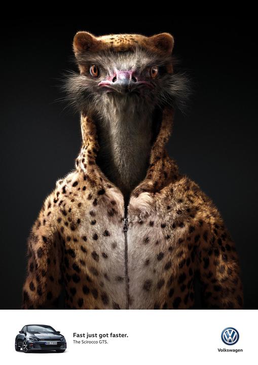 blog_aotw_rgb_ostrich_en_aotw